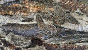 Ανακαλύφθηκαν απολιθώματα από τη μέρα της «Αποκάλυψης» πριν 66 εκατ. χρόνια (ΦΩΤΟ)