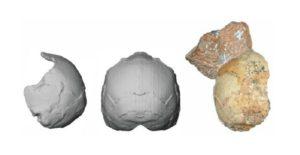 Το παλαιότερο δείγμα του Homo Sapiens της Ευρασίας βρέθηκε στην Ελλάδα!