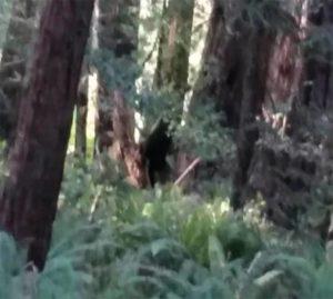 Εικόνες - ΣΟΚ: Κατέγραψαν απόκοσμο πλάσμα σε δάσος να σκοτώνει ζώα