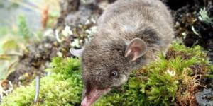 Νέα άγνωστα είδη ζώων εντοπίστηκαν από ερευνητές σε δάσος του Περού
