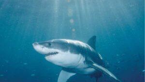 Κορωνοϊός: Μέχρι και μισό εκατομμύριο καρχαρίες μπορεί να θανατωθούν για να παρασκευαστεί το εμβόλιο