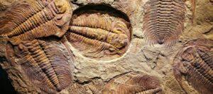 Μυστηριώδες προϊστορικό πλάσμα – Το μεγάλο μυστικό που ανακάλυψαν οι επιστήμονες